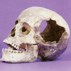 Tile screen shot 2015 02 23 at 1.43.52 pm